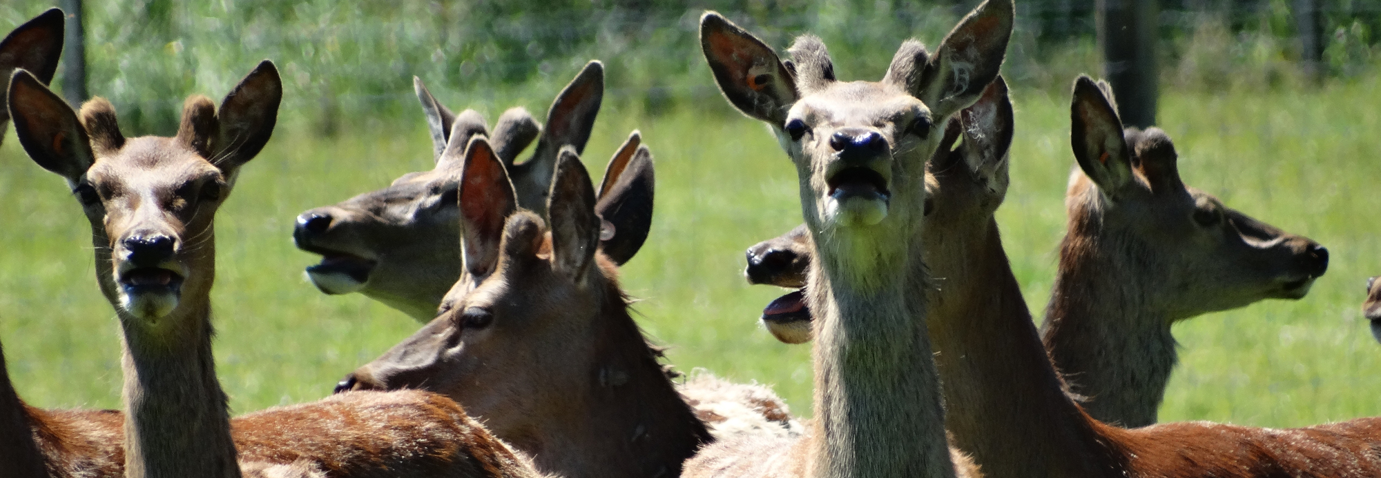 Useful Resources for Deer Farmers: Johne's Disease