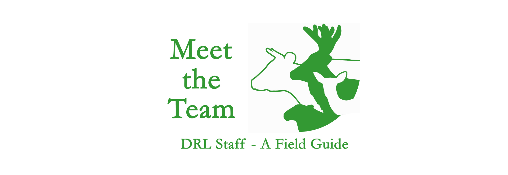 DRL staff - Meet the team